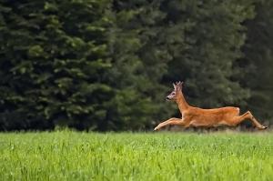 Hell yeah! I love a nice jaunt on my long, slender deer legs.